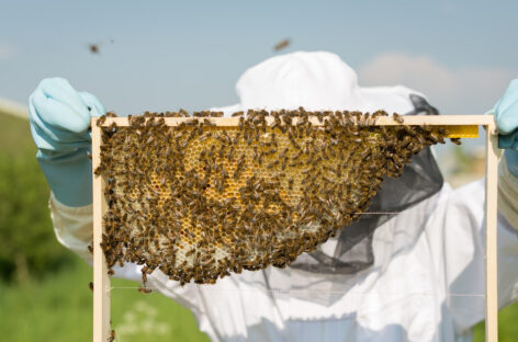 Беречь пчел от пестицидов просят земледельцев Сальского района
