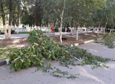 Коммунальщики «подравнивали» деревья на центральной улице Сальска