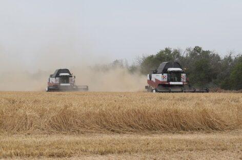 Около 28.900 тонн зерна нового урожая собрали в сельхозпредприятии «Колесников»