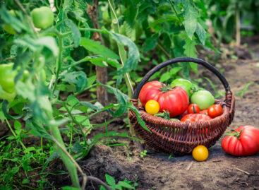 Сальским огородникам советуют, как бороться с болезнями овощей и вредителями, на них обитающими