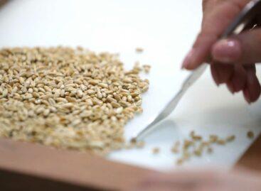 Ростовская область по сбору урожая ранних зерновых – лидер среди регионов России