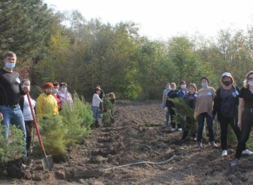 Сотрудники налоговой службы поучаствовали в акции древонасаждения