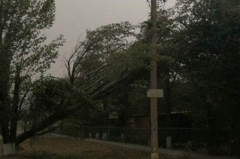 Огромный тополь упал на электролинию в Сальске, на шесть часов оставив микрорайон без электричества
