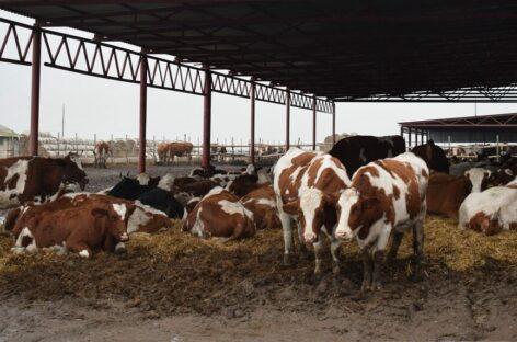 Программы «Начинающий фермер» в следующем году не будет