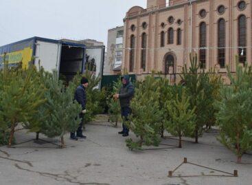 Где купить лесную красавицу: в Сальске и районе работают ёлочные базары