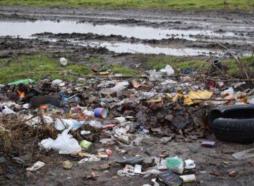 Хутор Бровки буквально завален мусором и стал пристанищем для бродячих собак