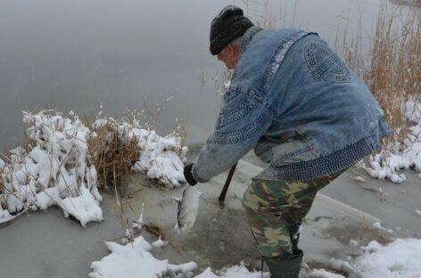 Жители Сальского района мешками собирали рыбу на берегу реки