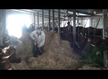 Из-за нехватки кормов коров в «Руси» посадили на диету