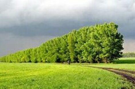 Россельхознадзор берет лесополосы берут под защиту от несанкционированной вырубки