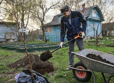 Земельный удел: в скором времени контроль за использованием дачных земель может быть усилен.