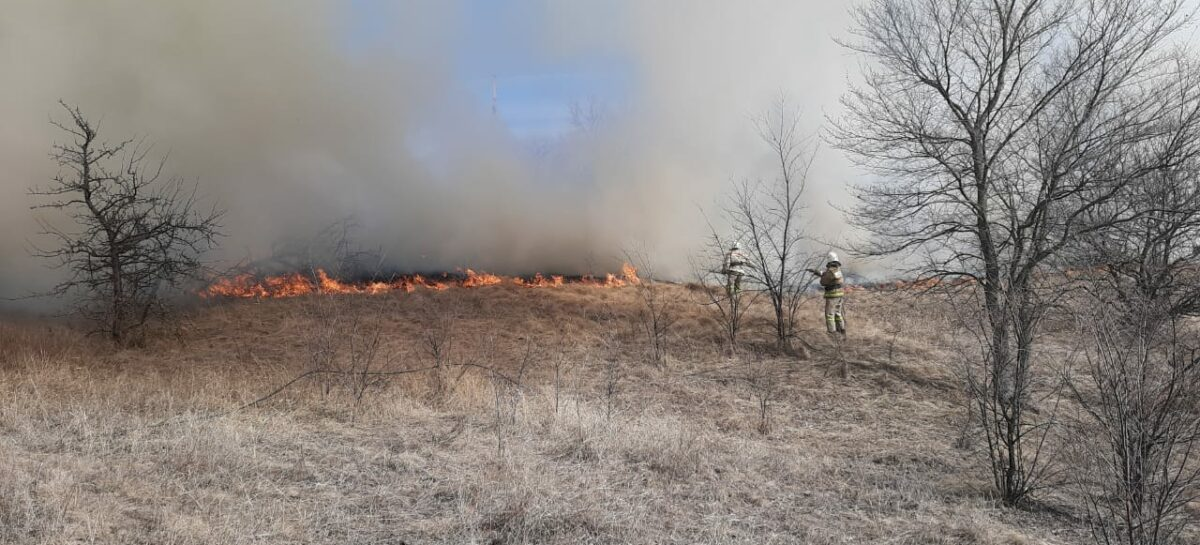 С приходом весны снова начала гореть прошлогодняя сухая трава, а в Сальском районе трижды пылал камыш