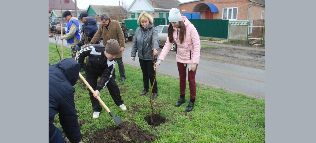 Сколько деревьев и кустарников высадили в Сальске в День древонасаждения