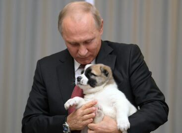 Путин поручил ввести учет домашних животных