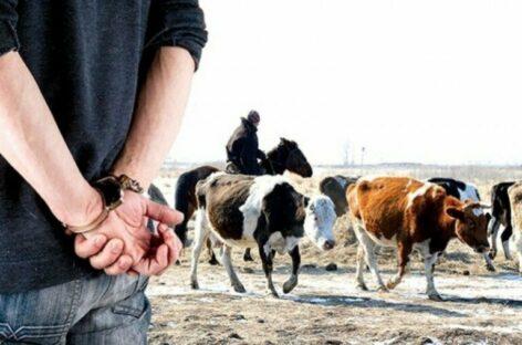Осудили скотокрадов