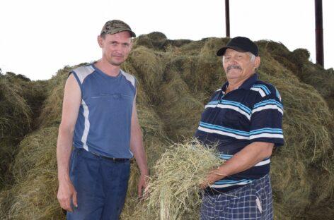 «Казачье-Агро»: в хозяйстве ведутся уходные работы и заготовка кормов для животноводства