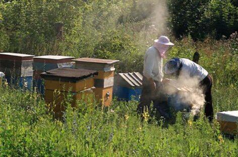 Пчеловоды получили защиту