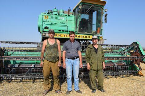 «Победа» — живёт: в базовом хозяйстве посёлка Супрун завершается жатва