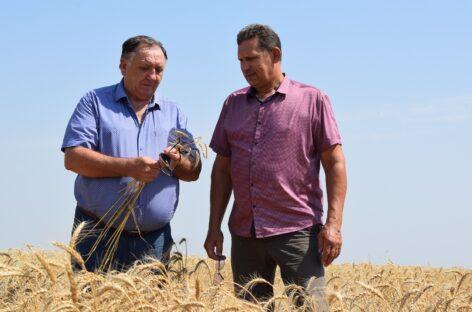 «Южное» — на финише: хозяйства Сальского района приближаются к завершению жатвы