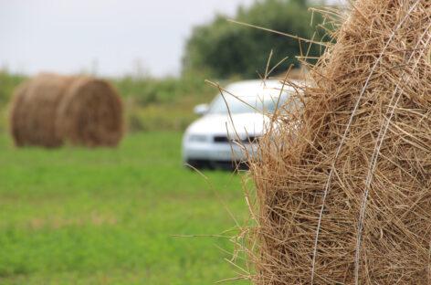 В Сальском районе участились случаи кражи сена