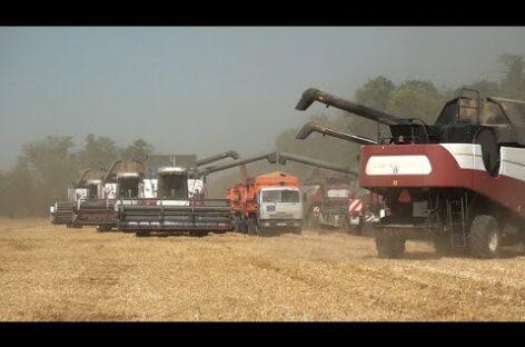 В закромах «Славян» уже 40 тысяч тонн зерна. Ждут рекордного урожая