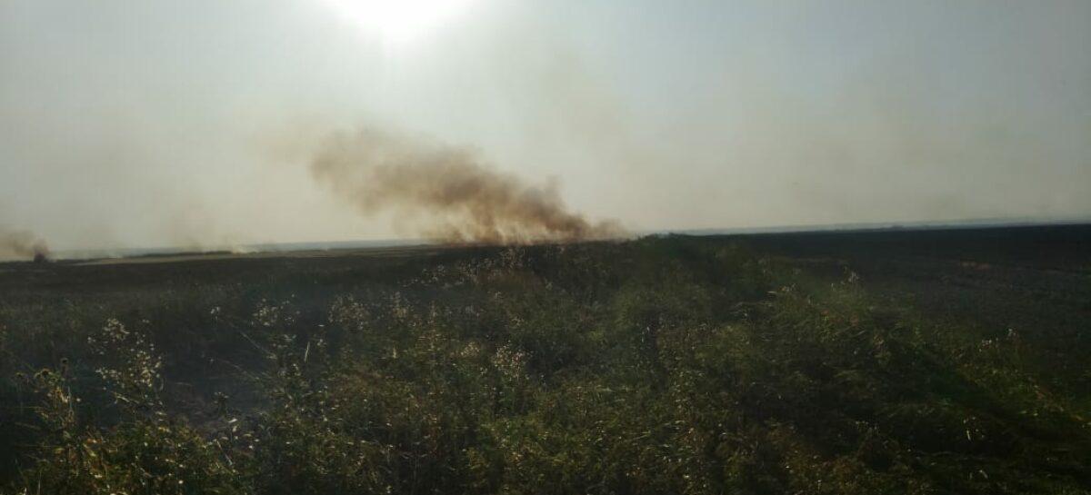 В Сальском районе на площади 5.000 квадратных метров горел камыш