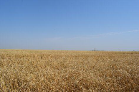 Василий Голубев: «Донские хлеборобы собрали 12 млн 685 тысяч тонн ранних зерновых»