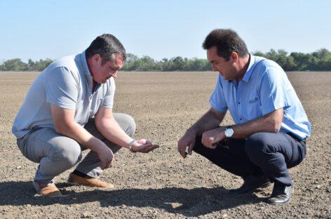 На полях ООО «Березовское» сеют пшеницу и убирают подсолнечник