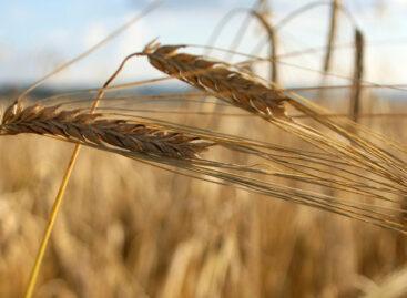 Со следующего года зерно в России будут отслеживать от поля до прилавка